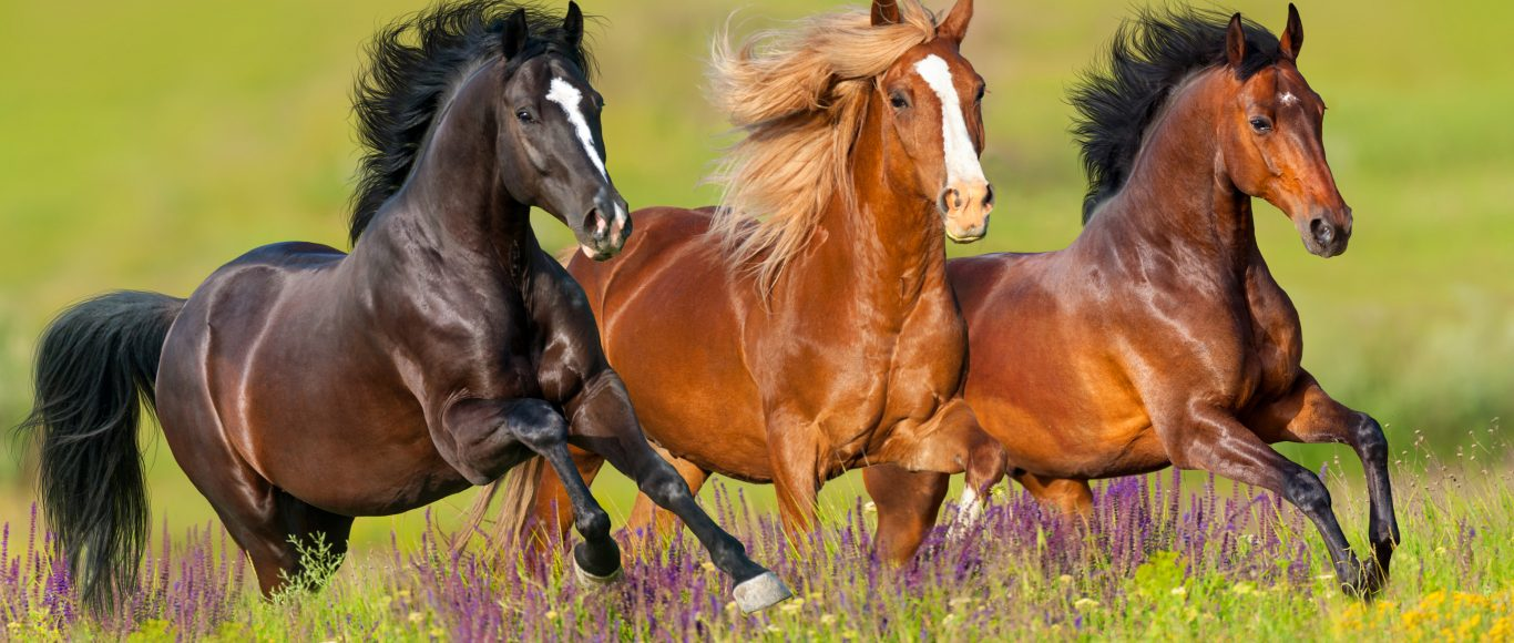 Photo of horses running in a field