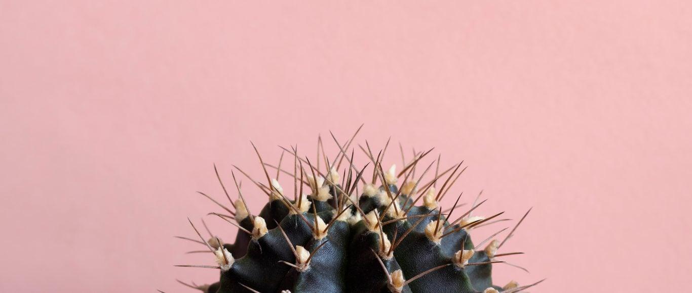 Photo of a cactus