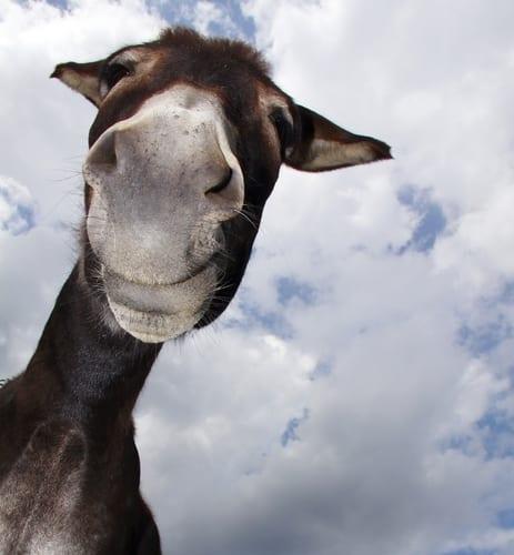 Photo of a donkey